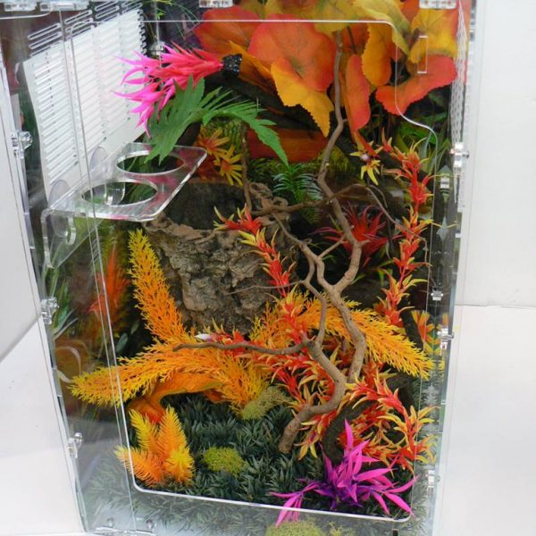 Eyelash Exotics | Live Harmless Reptiles 7